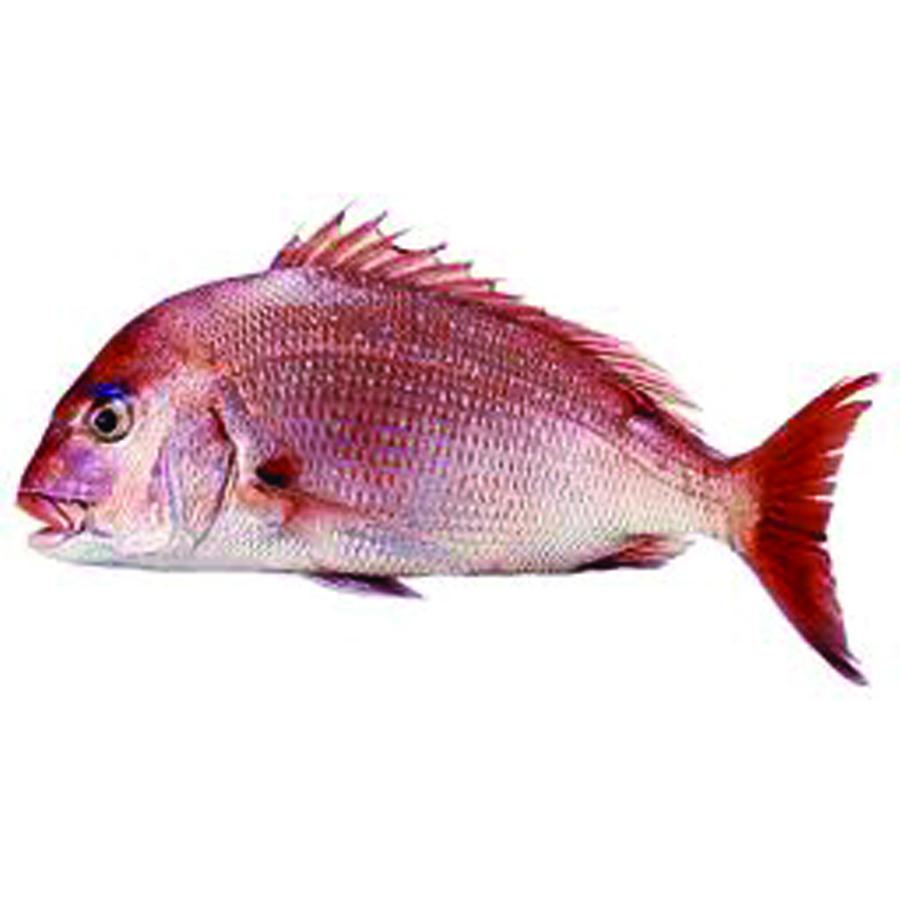 Madai new york fish for New york state fish